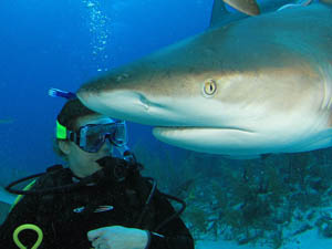 Shark Diving - Bahamas